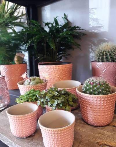 Nieuwe collectie aardewerk en planten in de winkel