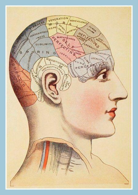 Vintage Brain phrenology diagram map Fridge Magnet human nature characteristics