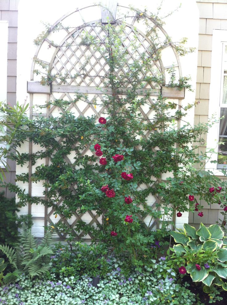 I Designed This Classically Inspired Trellis To Hide An