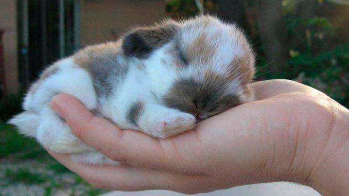 5 Cuidados que requiere un conejo doméstico