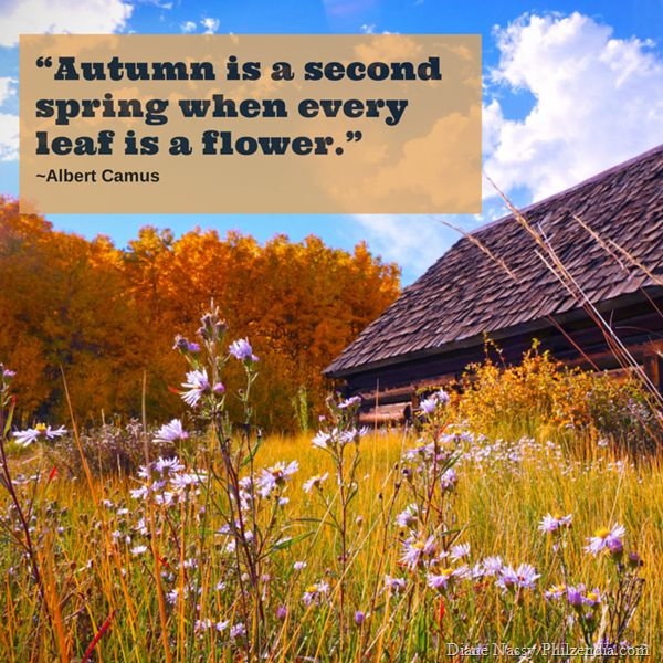 Best 25+ Quotes about autumn ideas on Pinterest  Fall season quotes, Autumn ...