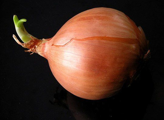 Raw to Sweet: How to Change the Intensity of Onions