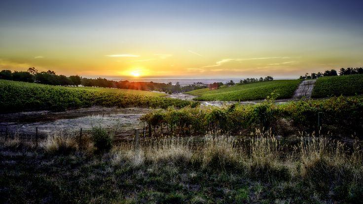 One Tree Hill - Barossa Wines