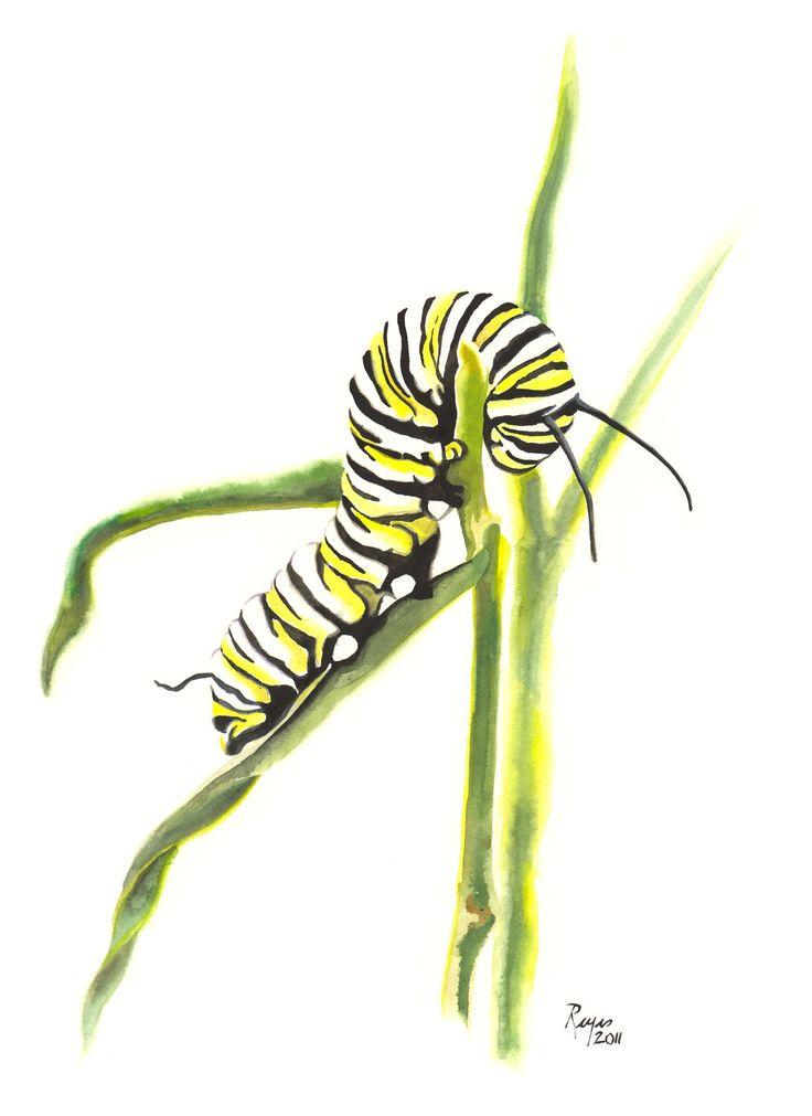 ORIGINAL Watercolor Insect Painting / Monarch Caterpillar