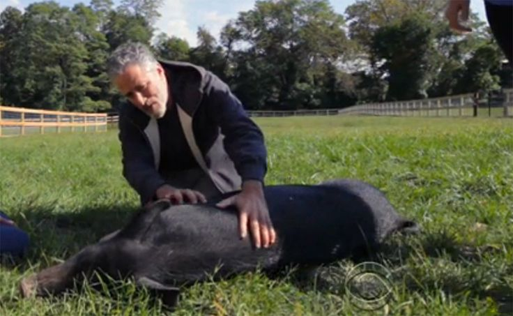 Post 'Daily Show,' the comedian and his family are engaged in building a life dedicated to helping animals.
