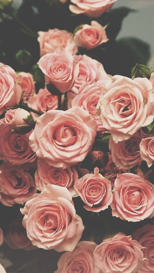 Pink Roses ★ Find more Vintage wallpapers for your #iPhone + #Android @prettywallpaper