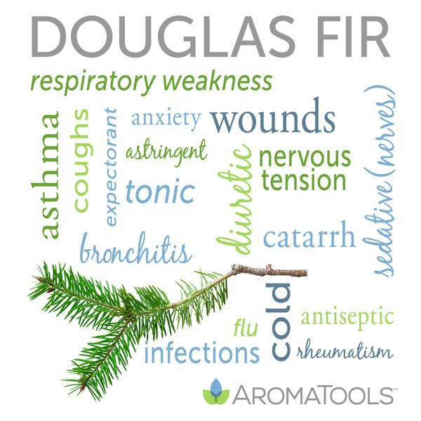 Douglas fir essential oil is steam distilled from the needles and twigs of the conifer tree Pseudotsuga menziesii. Douglas fir is prized for its effect on the respiratory system, muscles, and bones...