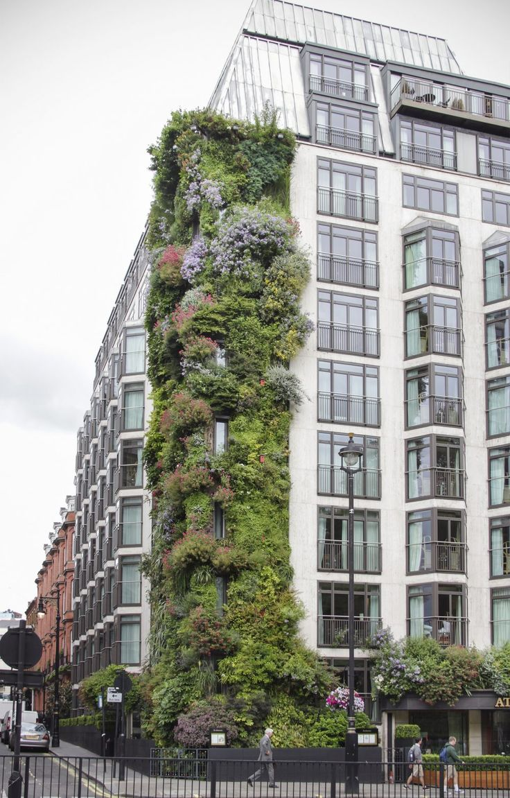 The Atheaeum hotel in Mayfair London Vertical garden by Patrick Blanc - Image by KotomiCreations