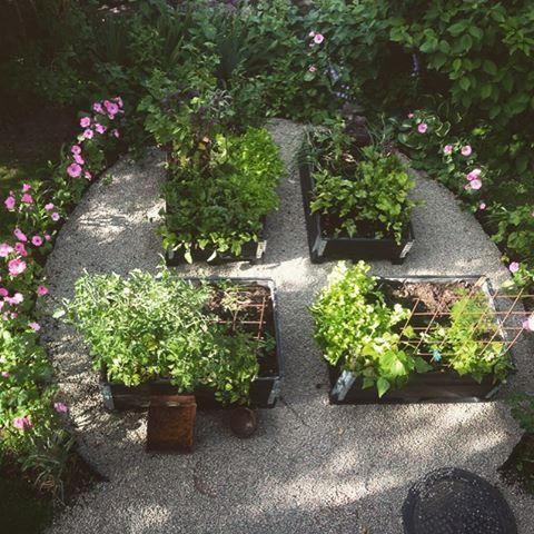Köksträdgården 2013 med en malva-odling runt om. Åh vad jag kan sakna den här lilla odlingen. Måste nästa år planera in en ordentlig köksträdgård på en ny plats. För inget slår närodlat  #pallkragar#malva#närodlat#trädgård #Williamsro