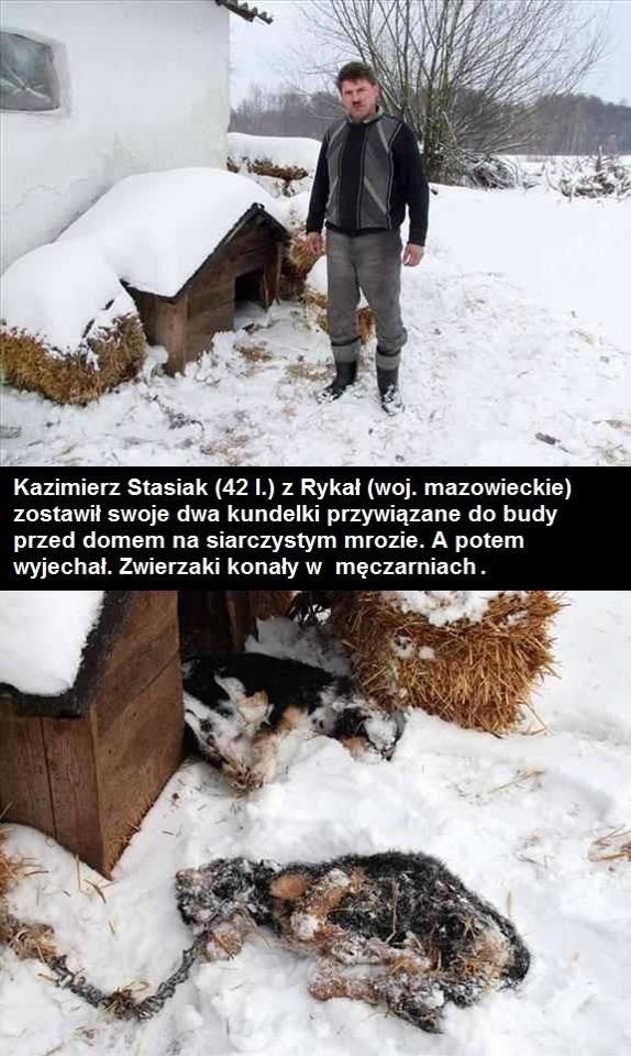 Translation: Kazimierz Stasiak (42 years old) from Rykal, Poland, left his two dogs chained outside in freezing cold, and went on vacation. Animals suffered horrible deaths...