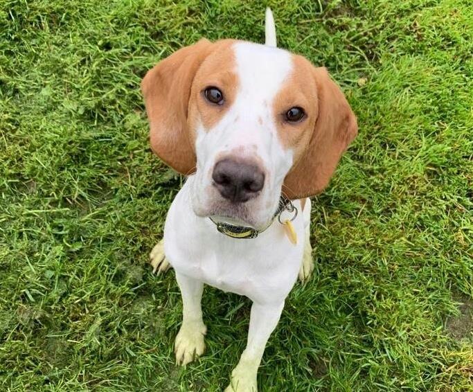 Skye Dogs Trust Dogs Dog School