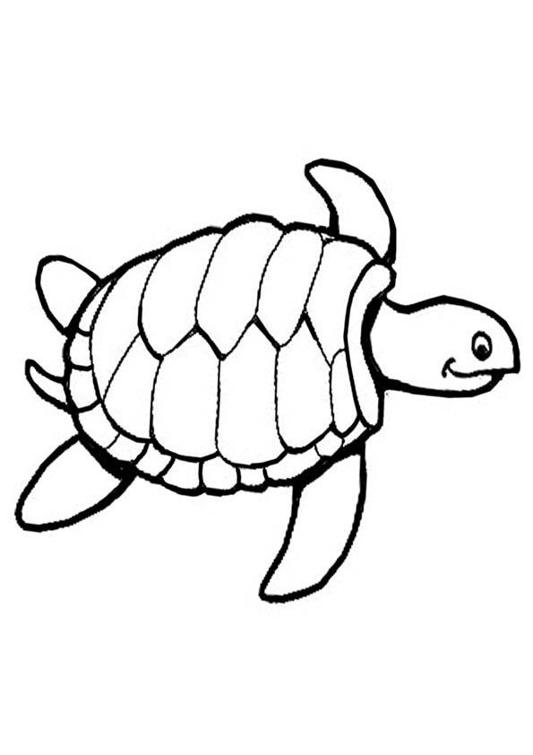 Turtle Coloring Page Turtle Coloring Pages Pattern Coloring Pages Snake Coloring Pages