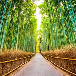 365 WONDERS OF THE WORLD: #149  The Arashiyama Bamboo Grove is one of Kyoto's top sights and for good reason.  Read more>> http://www.travelstart.co.za/lp/asia/flights  #travelstart #365wondersoftheworld #asia  #japan