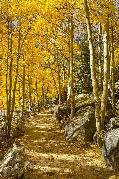 Aspen Path (Rocky Mountain National Park, Colorado) by Rob Greebon