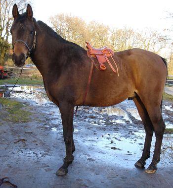 6 Tips for Selling a Saddle Online « HORSE NATION