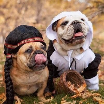'Happy Thanksgiving', English and French Bulldogs