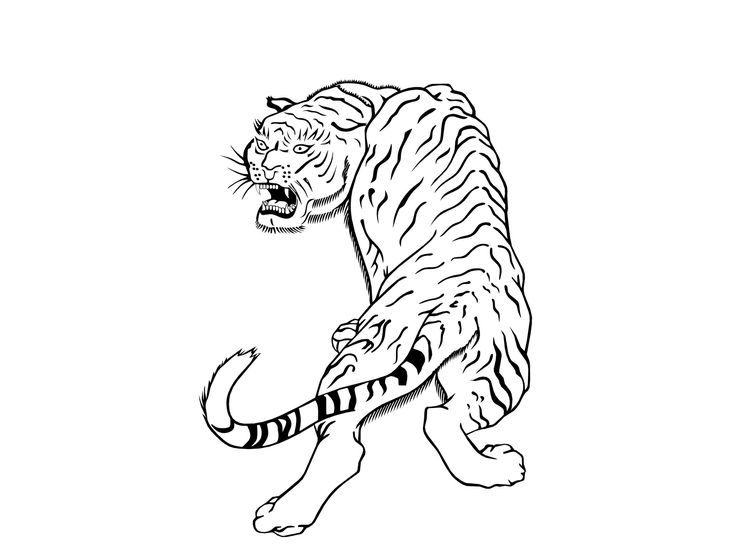 tiger tattoo outline designs animal tiger tattoo design