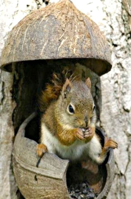 "Squirrel:  ""Well!  I have a coconut house, but the weather doesn't feel very tropical!"""