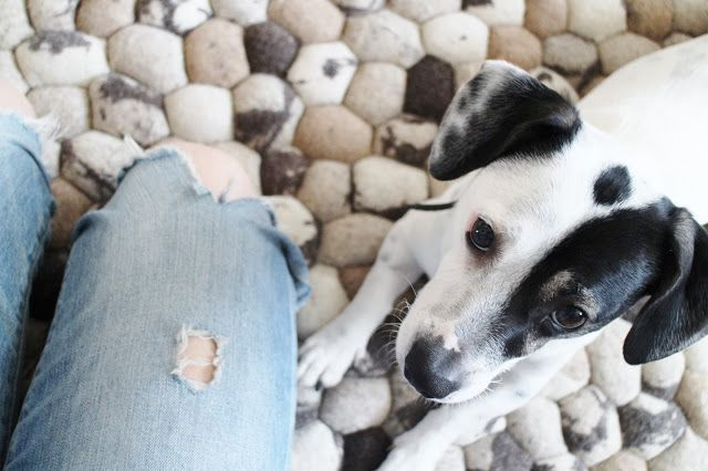 Dog owners are sometimes afraid to get a #carpet. Sukhi products are different. Our felt ball rugs are a great fit for someone who has a pet. Animals love us, too. #dogs #animals #pets #sukhirugs #feltballs #felt #nepal #handmade #design #homedecor   Dog owners are sometimes afraid to get a #carpet. Sukhi products are different. Our felt ball rugs are a great fit for someone who has a pet. Animals love us, too. #dogs #animals #pets #sukhirugs #feltballs #felt #nepal #handmade #design #homede