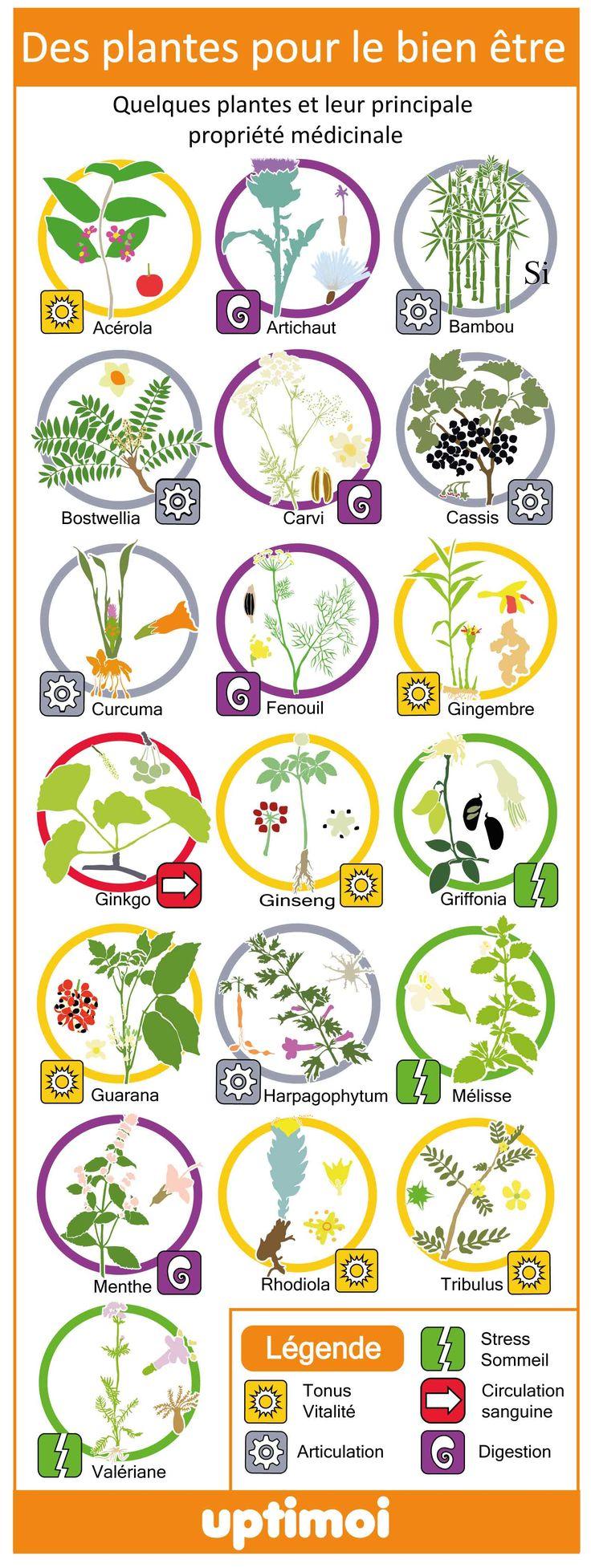 Une courte liste de plantes médicinales et leur principale propriété. Phytothérapie.  A short list of medicinal plants and their main property