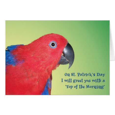 #stpatricksday #shamrocks #irish #luckoftheirish Top of the Morning Card