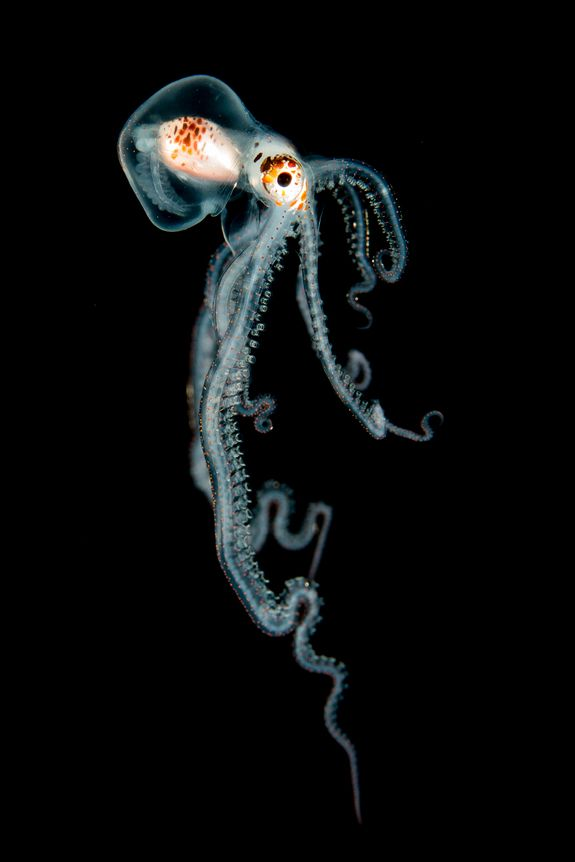 Octopus at Night by Helen Brierley. Stunning Underwater Photography Contest Winners (Photos)