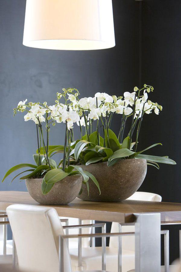25 beste idee n over kantoorplanten op pinterest binnenplanten binnenshuis bloemen en planten - Decoreer zijn professionele kantoor ...