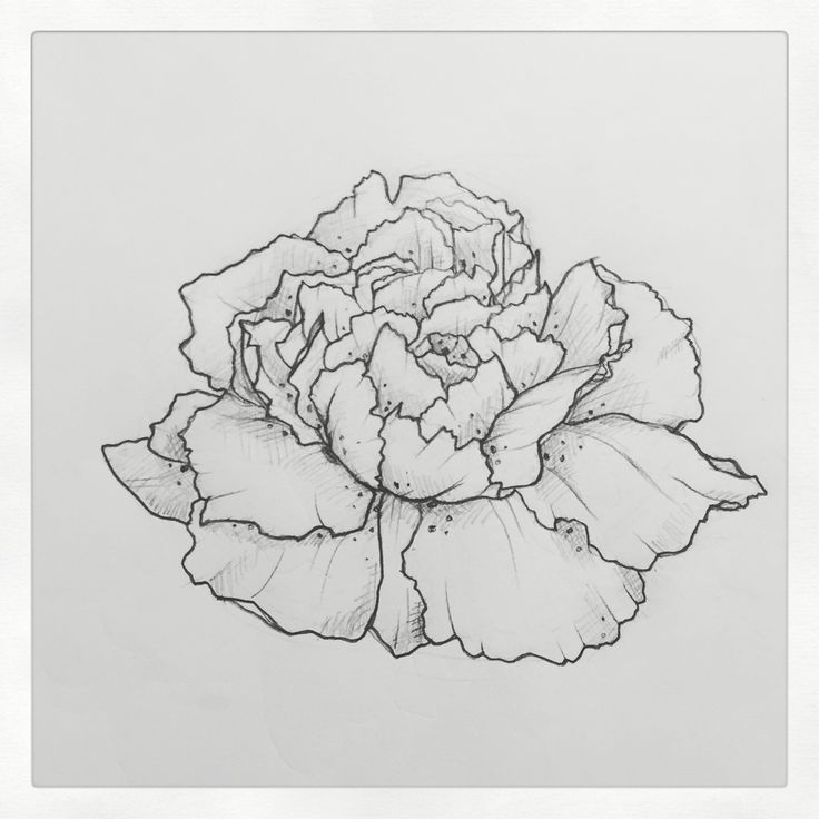 Carnation Tattoo Outline | www.pixshark.com - Images ...