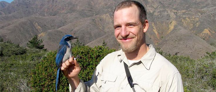 Jays and crows are conservationists for trees | THE WILDLIFE SOCIETY