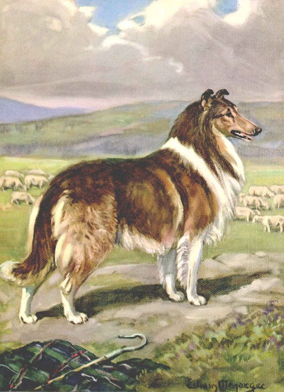 Collie Vintage Dog Illustration - Edwin Megargee - 1950s Dog Art Print