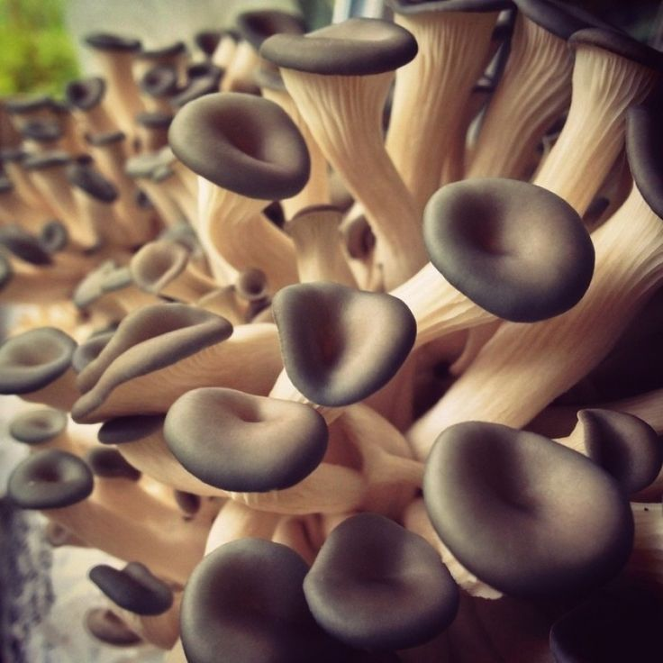 9z - Mushrooms Photo - Visual Hunt