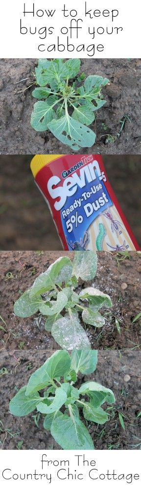 How to Keep Bugs off Your Cabbage Plants #hg101 #ad ~ * THE COUNTRY CHIC COTTAGE (DIY, Home Decor, Crafts, Farmhouse)
