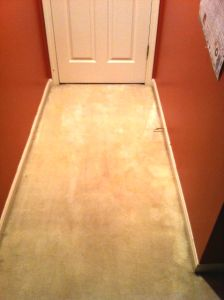 Dried Paint Removal From Carpet