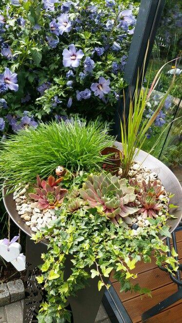 Mein Garten. repinned by www.landfrauenverband-wh.de #landfrauen # landfrauen wü-ho