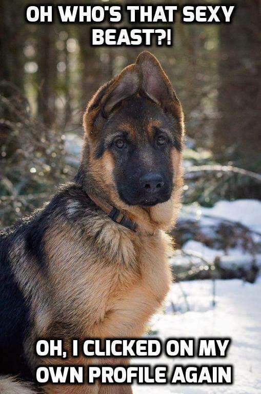 130 best German Shepherd Memes images on Pinterest ...