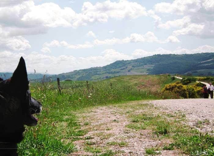 """The dog is waiting for our Off Leash Tuscanys'new friends Ecco il cane che attende sul sentiero i nuovi """"amici"""" di Off Leash Tuscany"""