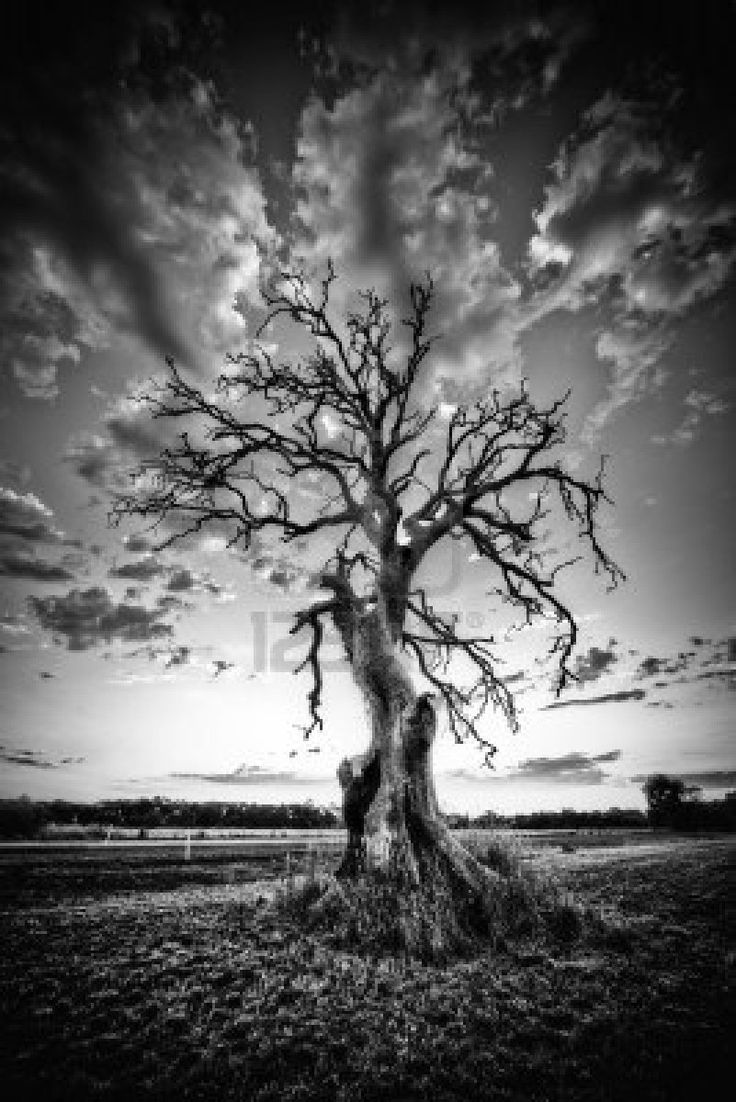 37 Best Dead Tree Pencil Drawings Images On Pinterest