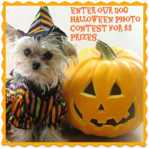 13 Dog Halloween Do's and Dont's - Fidose of Reality