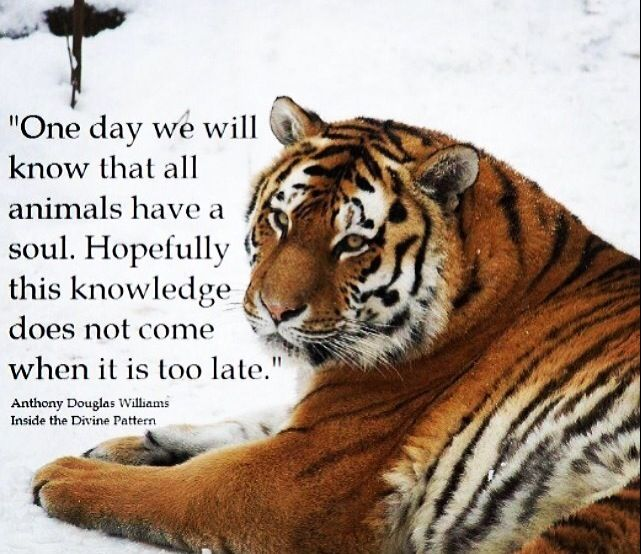 """One day we will know that all animals have a soul. Hopefully this knowledge…"