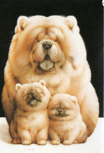 Mother Chow dog with puppies.  Beautiful pic of the family...