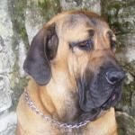 female dog names - http://seedogpictures.com/male-dog-names-with-meanings-male-dog-names/