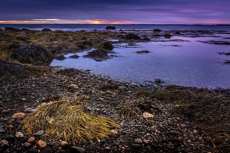 Low Tide In Blandford, Nova Scotia #2 by Mike Organ