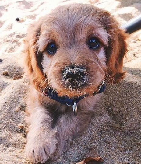 Looks like the dog wanted to build a sand castle as well just like every one else