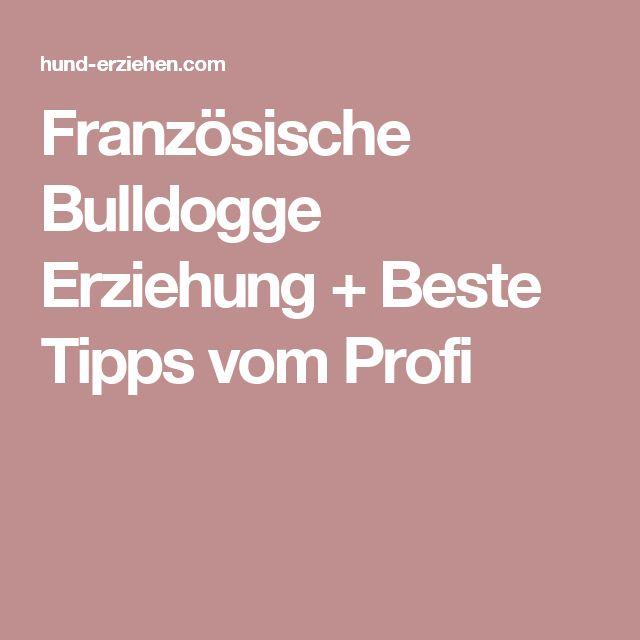 Französische Bulldogge Erziehung + Beste Tipps vom Profi