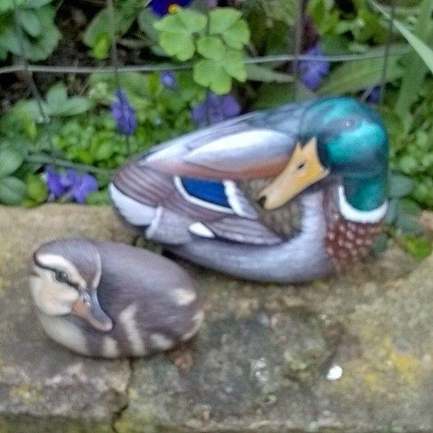312 Best Mallards Images On Pinterest Baby Ducks Ducks