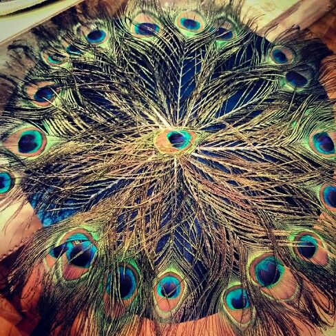 #peacock #ensemble