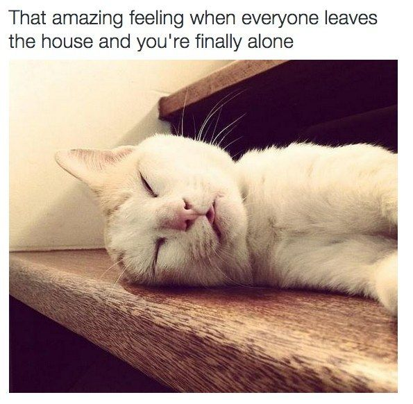 23 Pictures That Perfectly Sum Up Being An Introvert