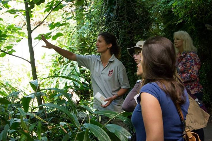 A guided tour from our expert bird keeper Catherine Francescon.