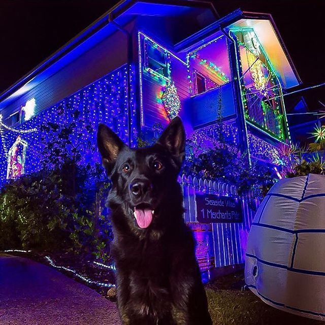 PD Heeko checking out the Christmas lights