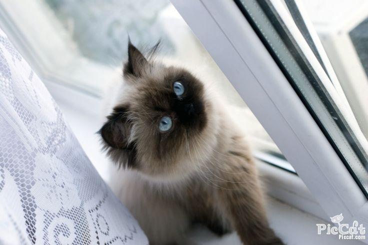 78 best images about pets on pinterest